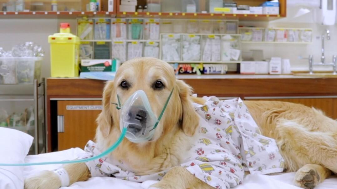 Pies demonstruje dzieciom, jak wygląda wizyta w szpitalu