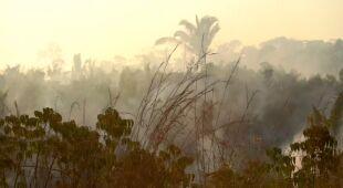 """""""Płuca Ziemi"""" płoną. Pożary Puszczy Amazońskiej"""