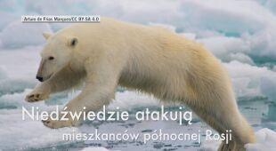 Inwazja niedźwiedzi na północy Rosji